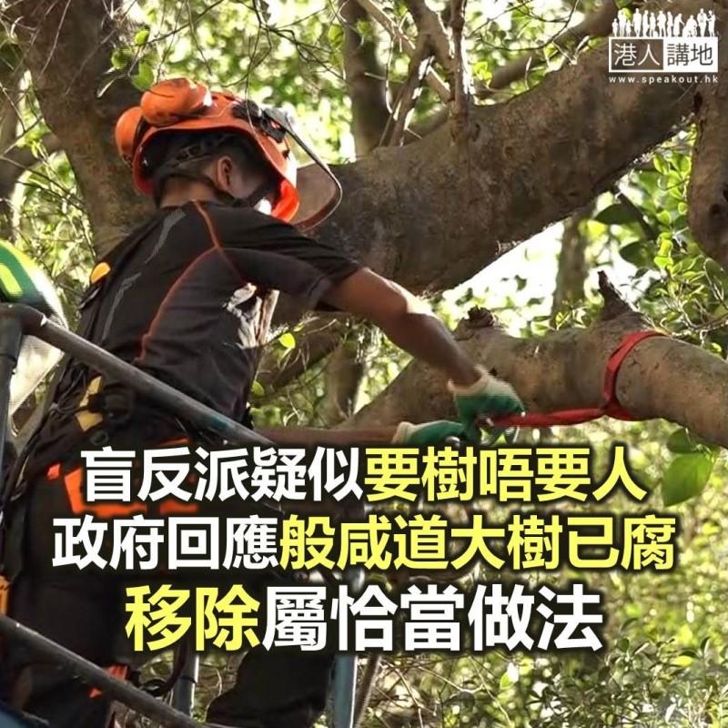【焦點新聞】政府回應稱移除般咸道大樹做法恰當 保障公眾安全