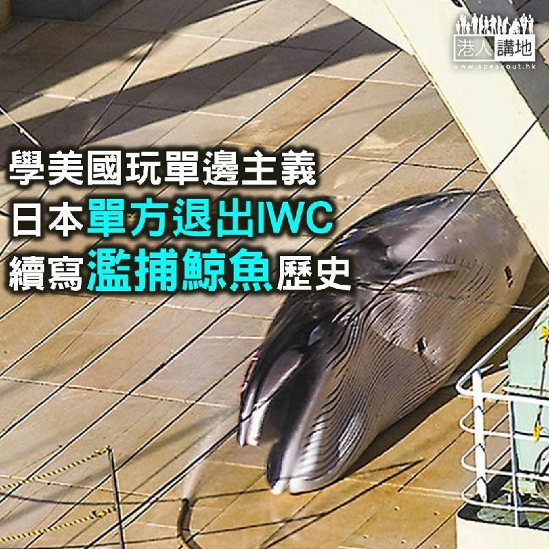 【諸行無常】科學捕鯨可怕、商業捕鯨更可怕!