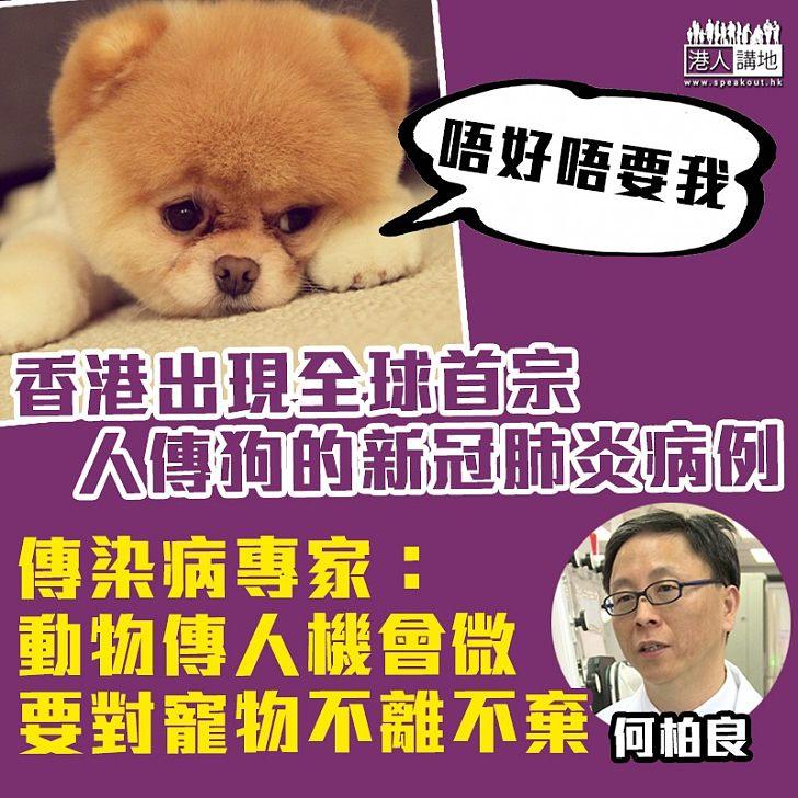 【新冠肺炎】香港出現全球首宗人傳狗的新冠肺炎病例 專家指動物把病毒再傳人的機會甚微 呼籲主人們對寵物要不離不棄