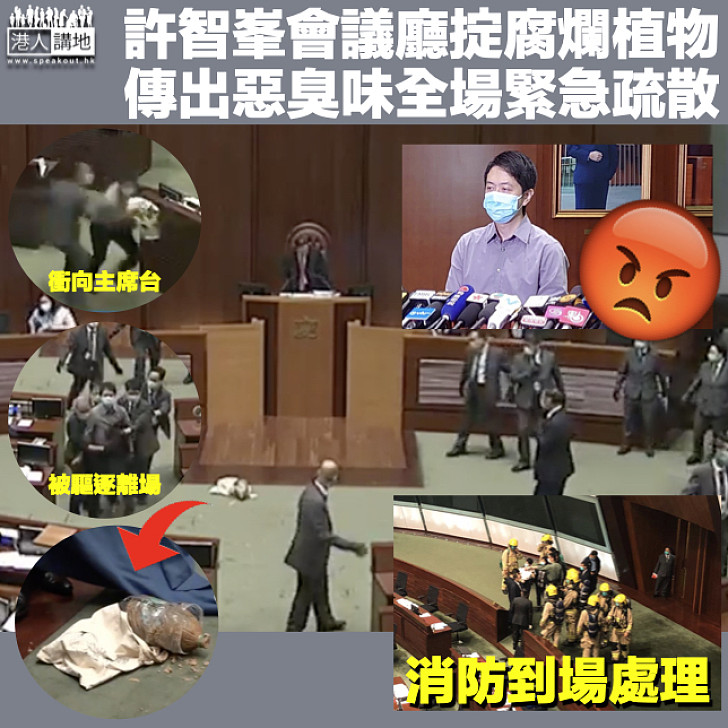 【大話議員】許智峯會議廳內掟腐爛植物 全場疏散消防到場處理