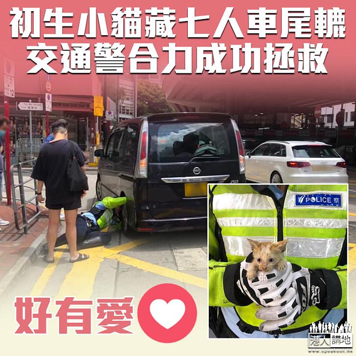 【愛護動物】初生小貓藏七人車尾轆 交通警合力成功拯救