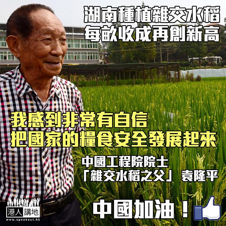 【消滅饑餓】湖南種植雜交水稻每畝收成再創新高