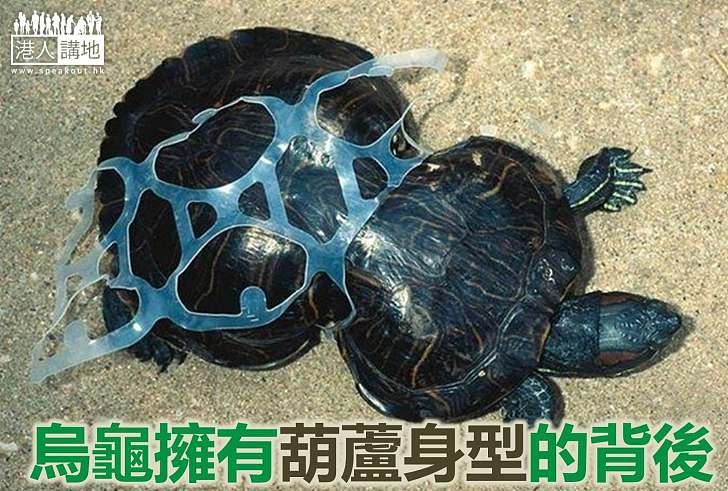 【生態新聞】烏龜擁「葫蘆身型」揭示生態悲劇