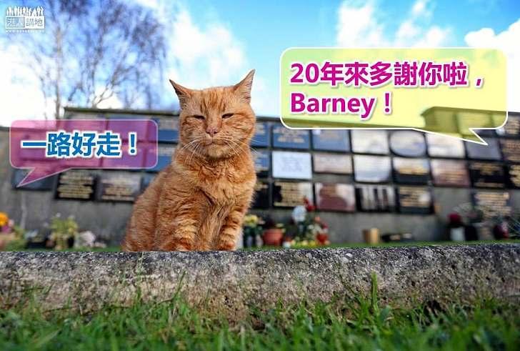 【暖心故事】20年來在墳場給人慰藉 貓貓Barney逝世